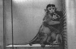 animal-testing-image-3
